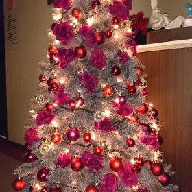 コラム 花と生き物係 クリスマスツリー写真