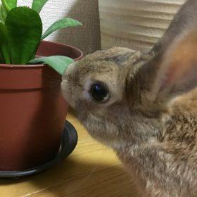 コラム うーちゃんとの日常 ウサギ写真